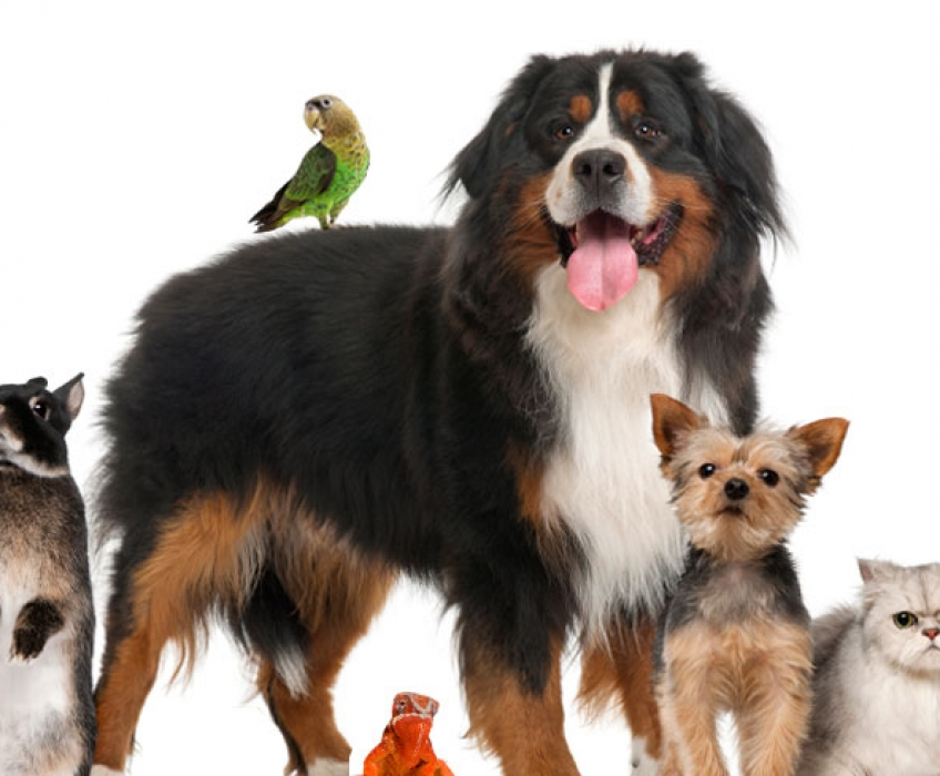 The Pets & Animals Directory