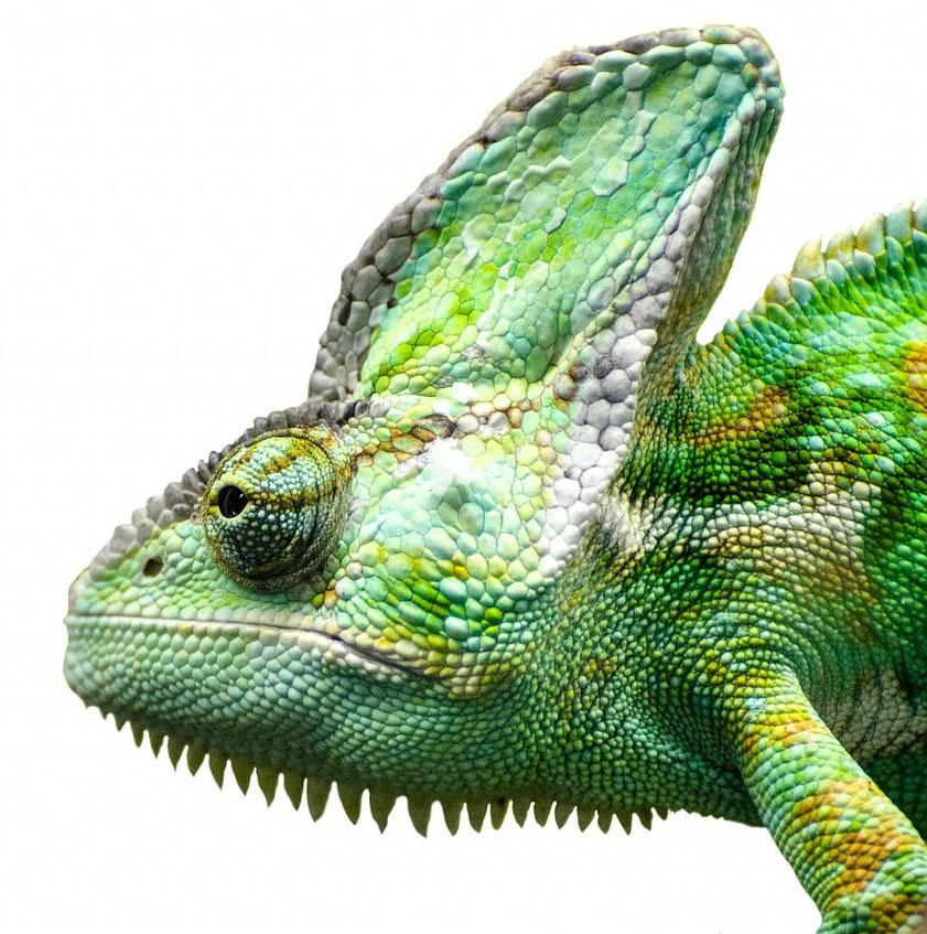 reptile-316281_128023