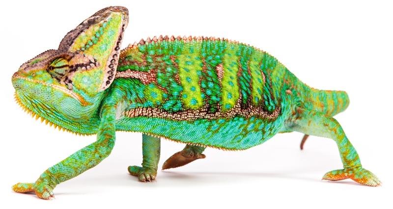 chameleon-shop